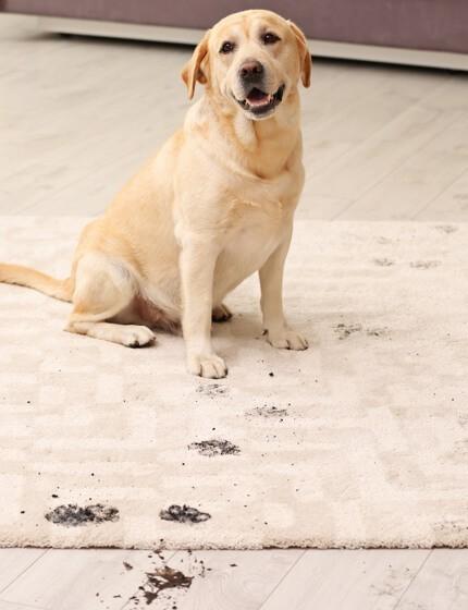Rug care tips | Birons Flooring Inc